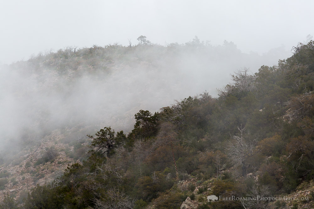 Foggy Weather in High Desert Mountains