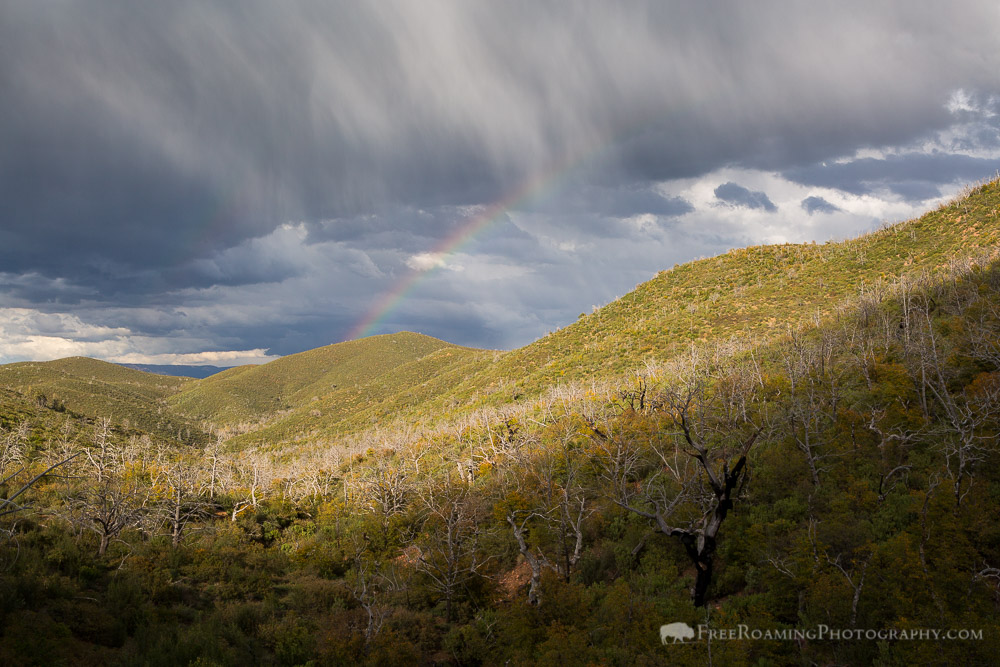 Rainbow Over Burned Desert Forest
