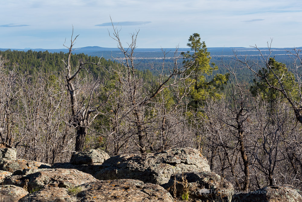 Pine Forest Overlook
