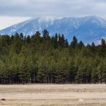 Elk Below San Francisco Peaks