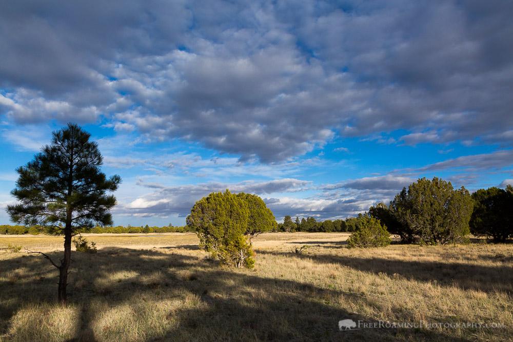 Meadow Around Stock Pond
