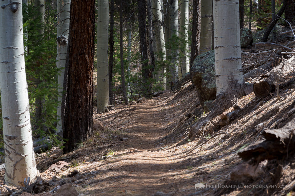 Arizona Trail in Aspen Trees