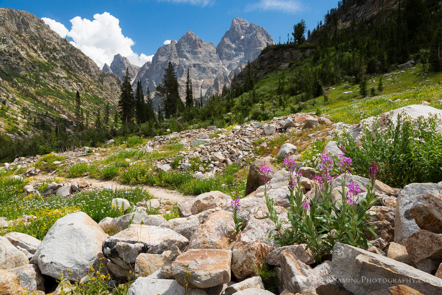North Fork of Cascade Canyon Trail
