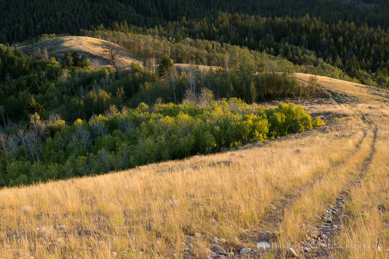 Trail Over Grassy Ridgeline