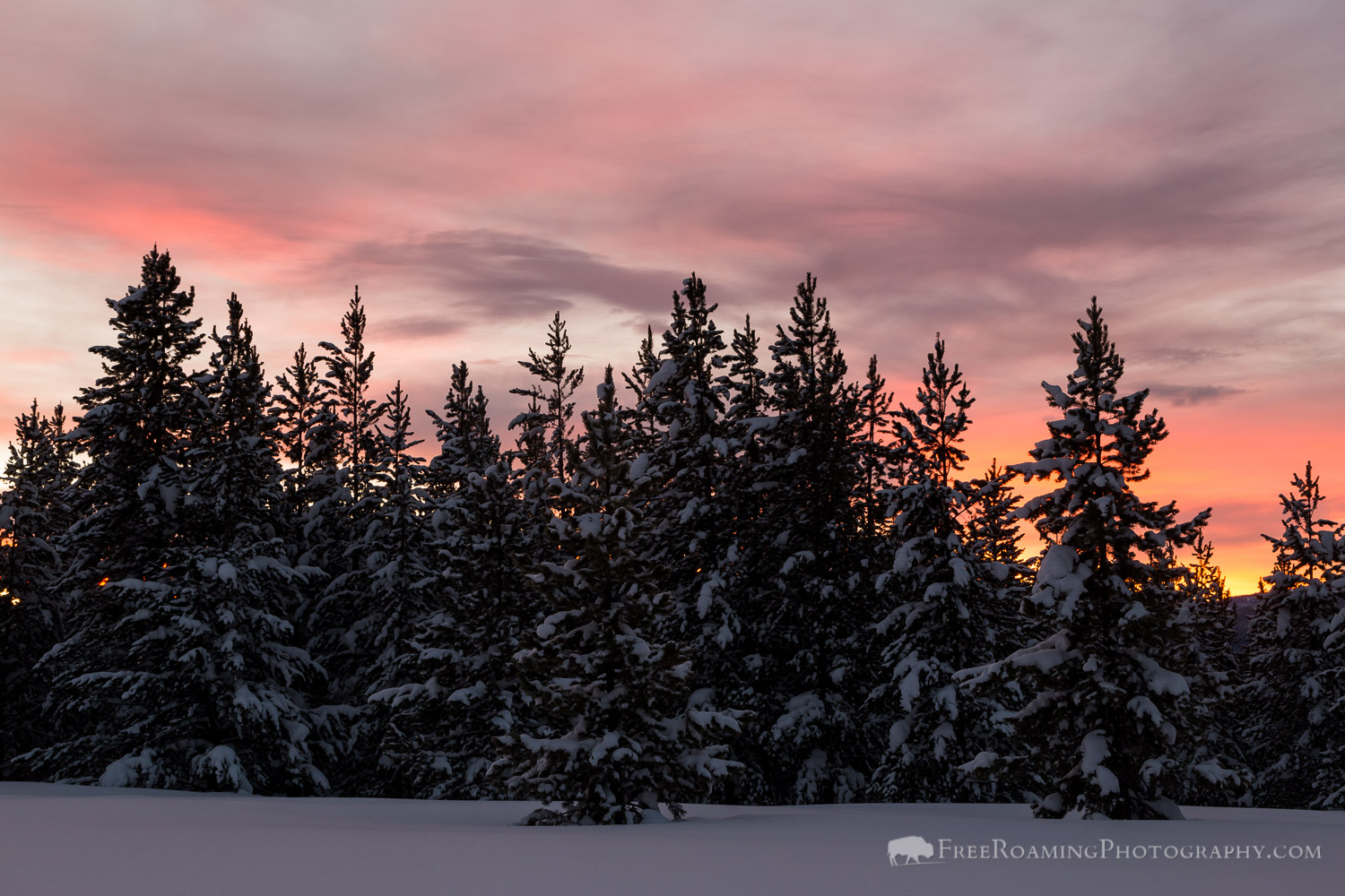Sunrise and Evergreen Trees
