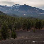 Evergreens in Lava Field