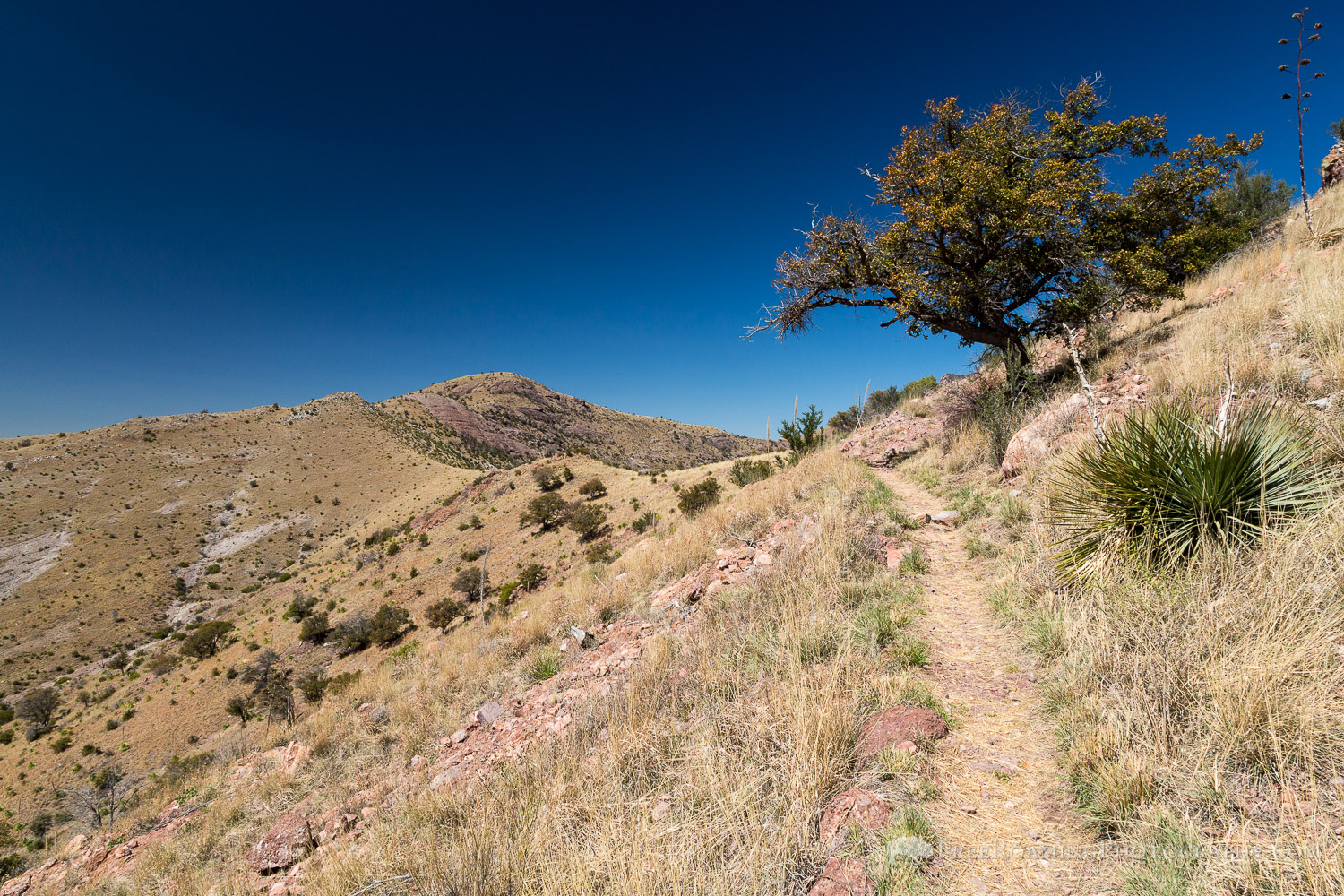 Yaqui Ridge Trail