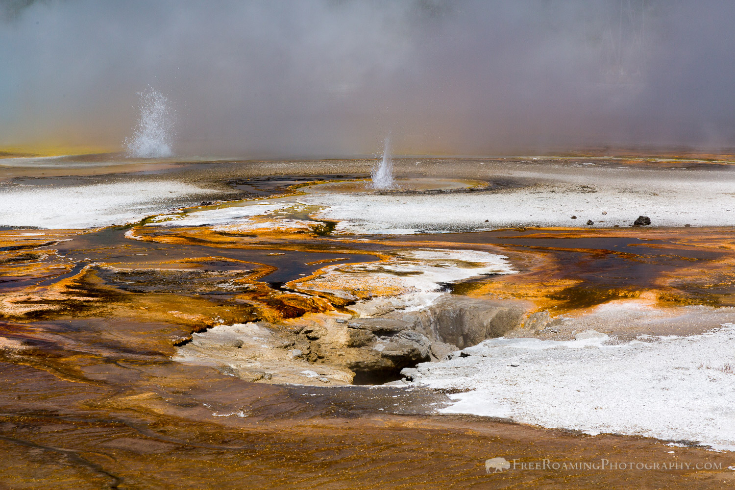 Thermophiles and Geysers