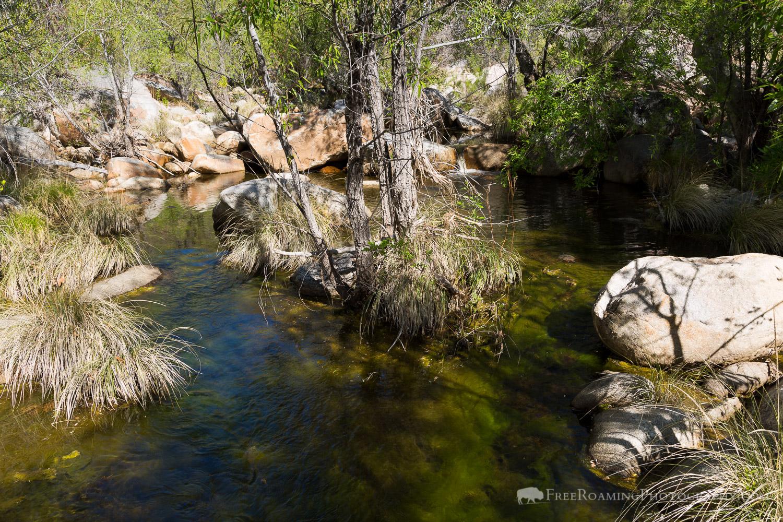 West Fork of Sabino Creek