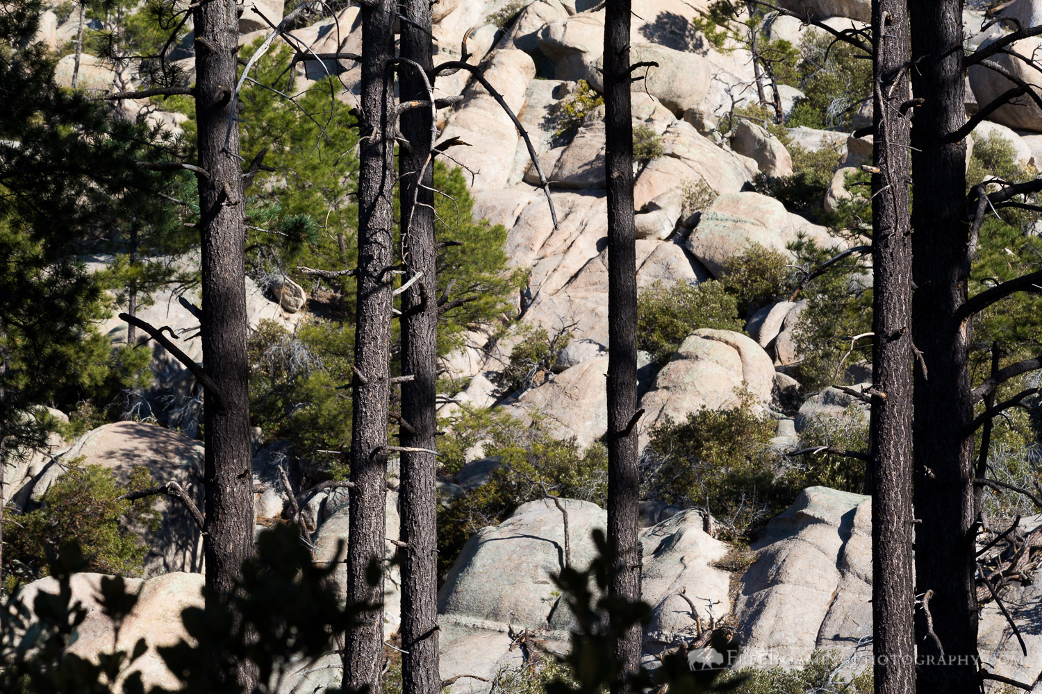 Pine Trees and Granite Boulders