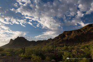 Desert Floor Below Picacho Peak