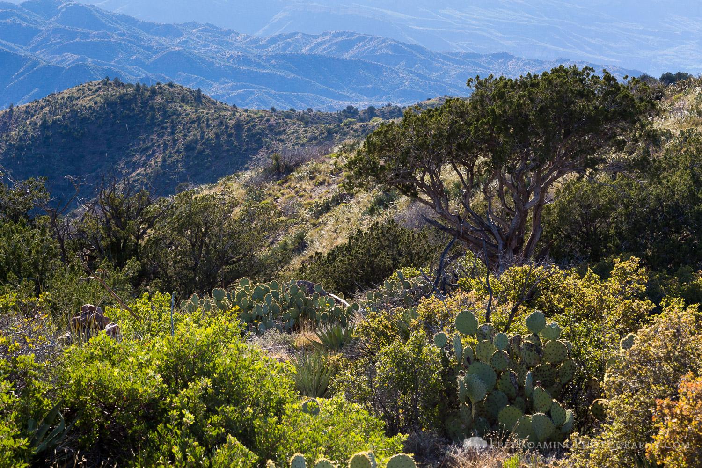 Day 24: Reavis Pass to Pinyon Mountain