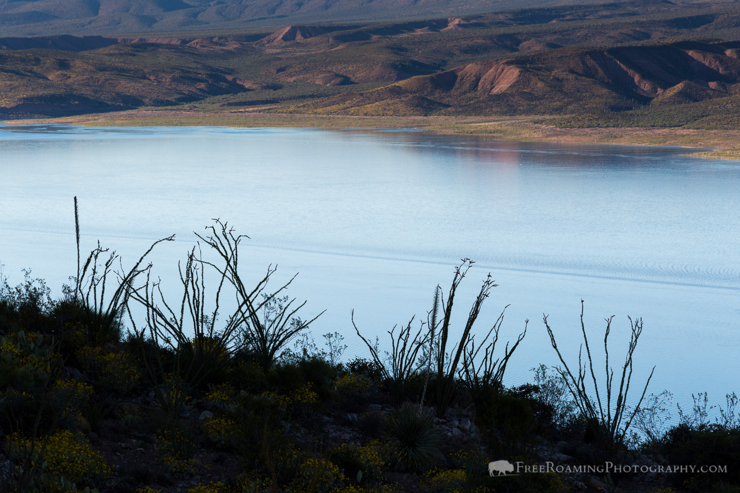 Ocotillo Against Roosevelt Lake
