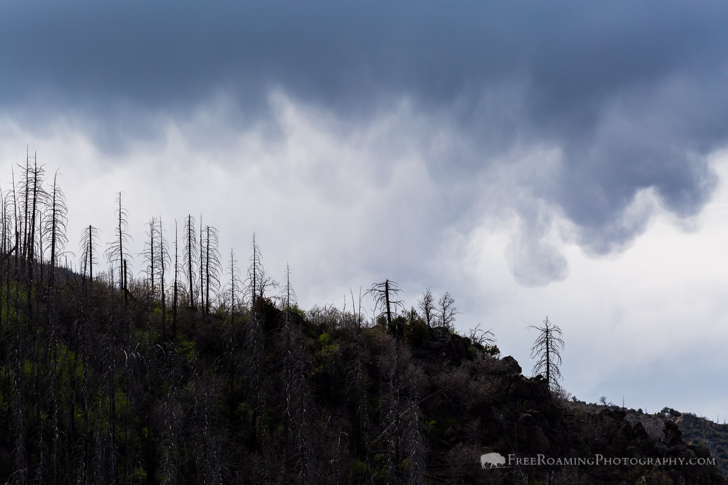 Storm Clouds over Burned Trees