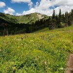 Hiking Trail in Mountain Meadow