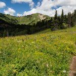 Hiking Trail in Mountain Meadow