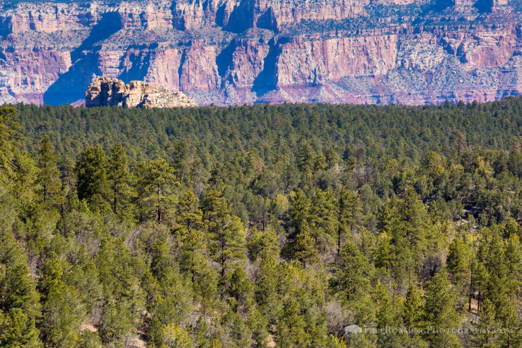 Grand Canyon from Coconino Rim