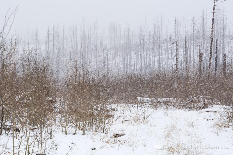 Snow Storm on Arizona Trail