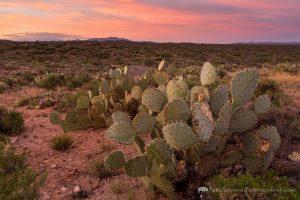 Sunrise over Sonoran Desert