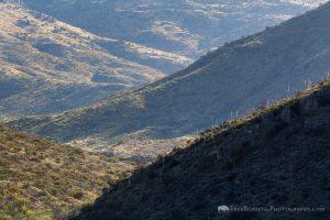Rincon Mountain Foothills