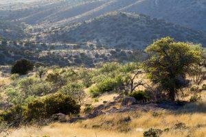 High Desert Grassland Hills