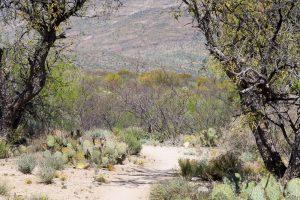 Arizona Trail in the Rincon Valley