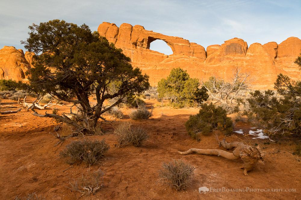 Skyline Arch and Juniper Tree