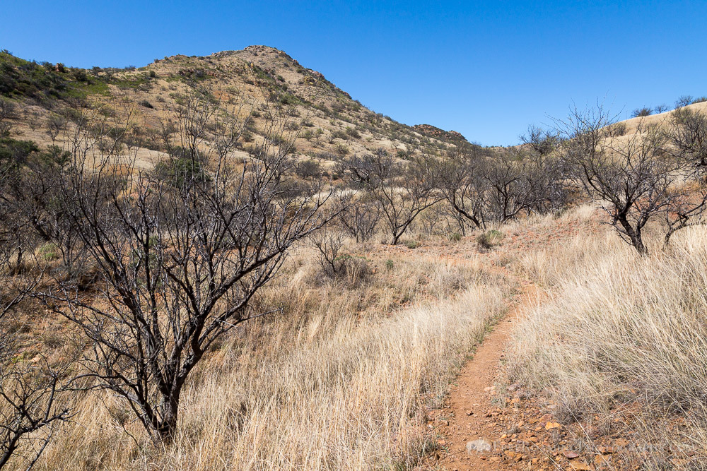 Mesquite Trees Below Rocky Hill
