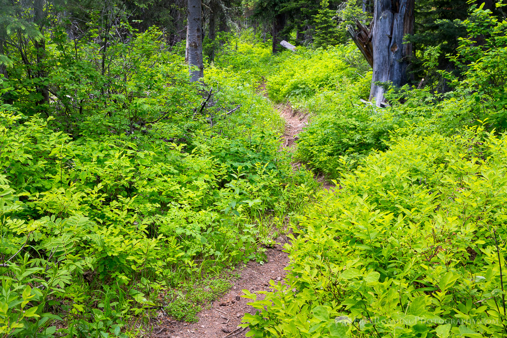 Lush Vegetation Along Phillips Canyon Trail