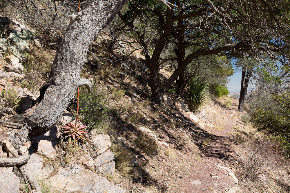 Hiking Trail Below Pinyon Pines