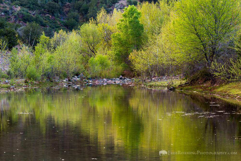 East Verde River and Riparian Trees