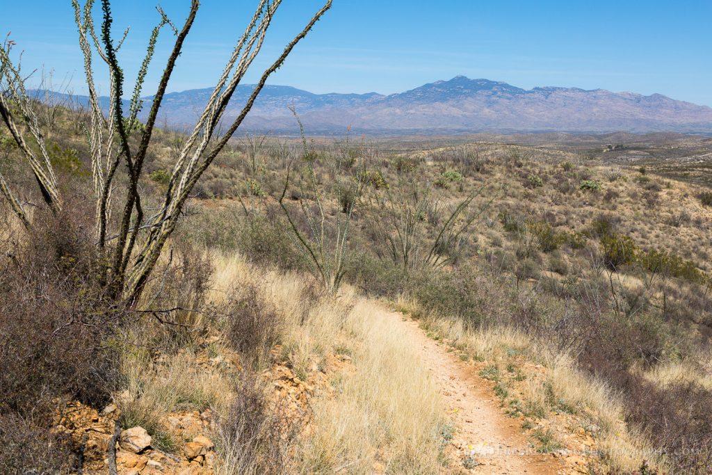 Rincon Mountains Above the Arizona Trail