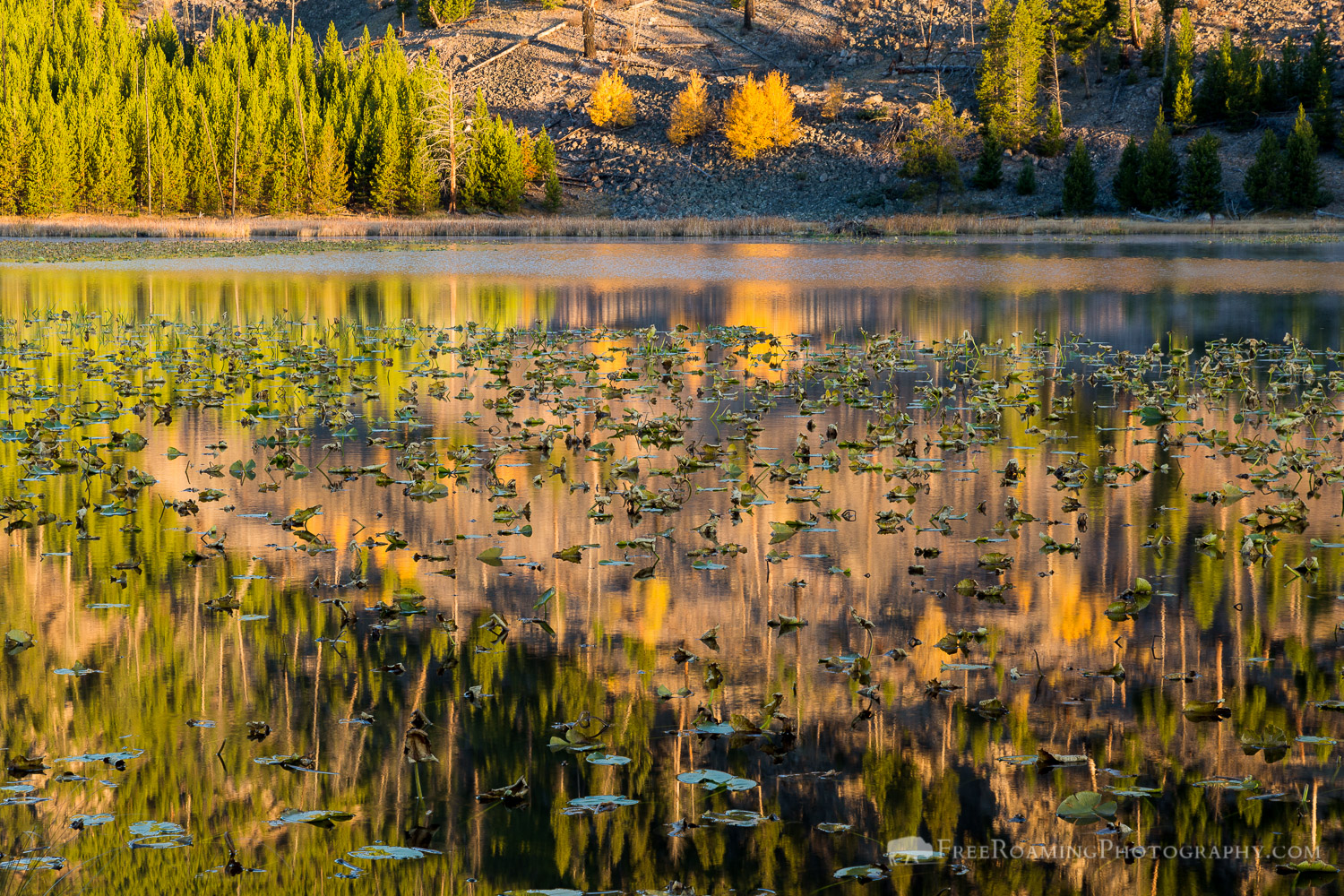 Harlequin Lake Reflections