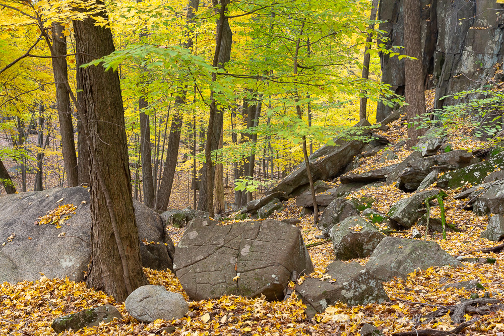 Boulders and Forest Floor in Fall Leaves