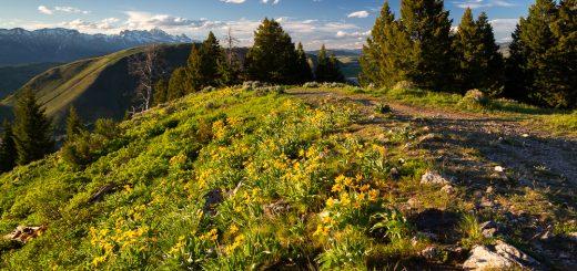 Josie's Ridge Overlooking Jackson Hole